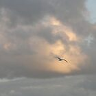 Sea Gull in storm clouds, Cornwall. by jackie martino