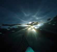 Spotted Eagle Ray by lilithlita