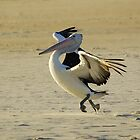 PELICAN DANCE by UncaDeej