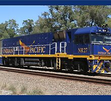 The Indian Pacific - Diesel Loco by glennmp