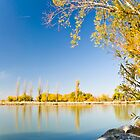Lake Burley Griffin Canberra by Brett Still