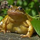 A Frog! by Steve  Liptrot