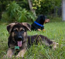 Kody and Marley chilling in the garden by Karel Kuran