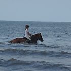 horses and sea by jackie martino
