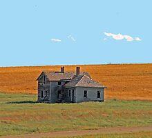house by Lynne Prestebak