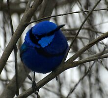 True Blue  by Jon Staniland