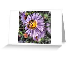 A Honey Bee Greeting Card