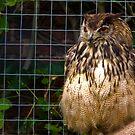 Owl #1 by Trevor Kersley