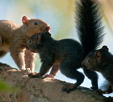 Squirrel Family by David Friederich