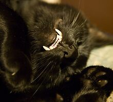 Black cat showing its vampire teeth by Ian Middleton