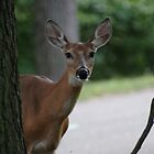 I see you by Carol Smith