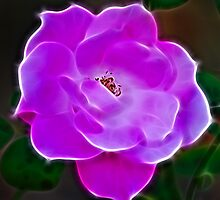 Definately Pink  by laureenr