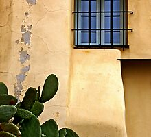 The cactus and the window by Barbara  Corvino