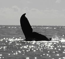 Humpback Whale  by sandra greenberg