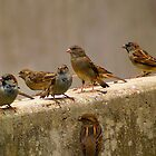 sparrows gathered on the ledge by kellimays