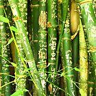 bamboo graffiti by Chris Parker
