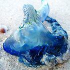 blue bottle by Chris Parker