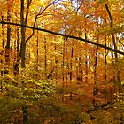 Autum Woods by RozyDee