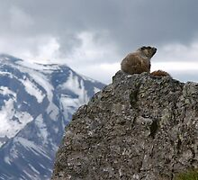 Marmot on Mountain by Gene  Tewksbury