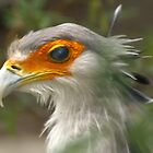 Secretary Bird by kellimays