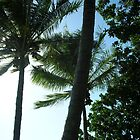 Palm Tops by Kassey Ankers