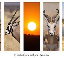 Etosha National Park - Namibia by Steve Bullock