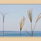 seaside whisper by picketty
