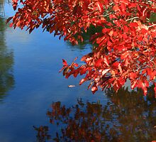 Silky Oaks Reflections by Luke and Katie Thurlby