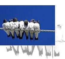 Australian Birdlife by Holly Kempe