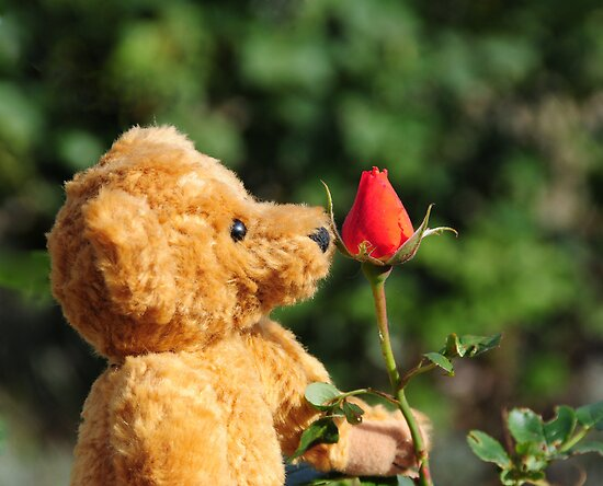 Smelling roses by faithimages