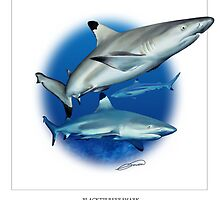 BLACKTIP REEF SHARK 2 by DilettantO