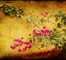 Golden wall with bougainvillea by Silvia Ganora