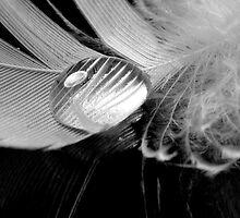 Quicksilver by Simon Hackney