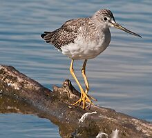 Yellow Legs is My Name by David Friederich