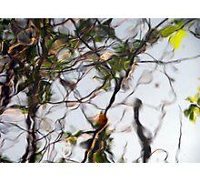 Introspect Photographic Print
