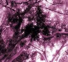 Study in Light and Dark – A Canopy of Branches in Pink  by Ivana Redwine