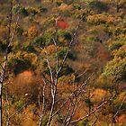 autumn background by fotomagique
