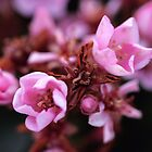little pink flowers by Yentuoc