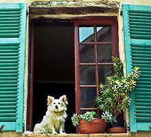 How much is that dog at the window ? by Pascal Inard