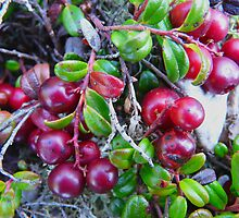 Wild Moss Cranberries by MaeBelle