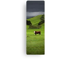 Hereford bull - Gippsland Canvas Print