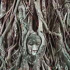 Buddha head of Ayutthaya by tracyleephoto