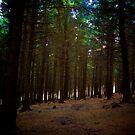Wander by KitPhoto