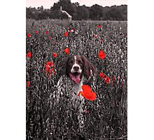 A Loyal Friend to Brighten your Dull Moments Photographic Print