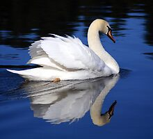 White Swan by Stephen  Van Tuyl