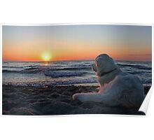 Enjoying the sunset (Denmark) Poster