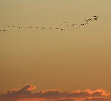 Time to roost! Sunset. Bribie Island,  East Queensland. by Rita Blom