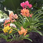 Mixed Orchids Colourful by LuvlyGrafix
