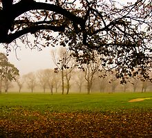 Fawkner Park on a misty morning by Kamalpreet S. Sawhney