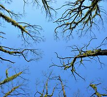 Veins of life by MikeyR